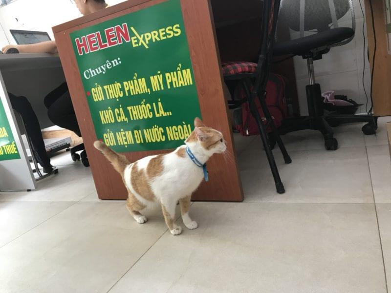 thủ tục nhập khẩu chó mèo