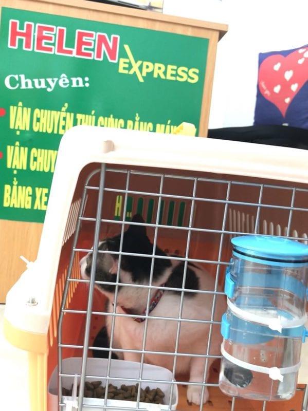 van chuyen thu cung bang may bay 1