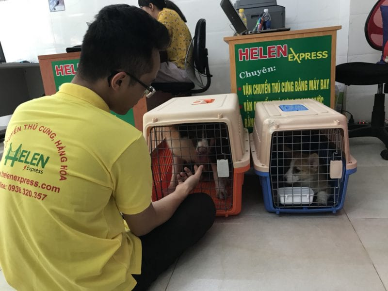 Gửi chó đi Malaysia