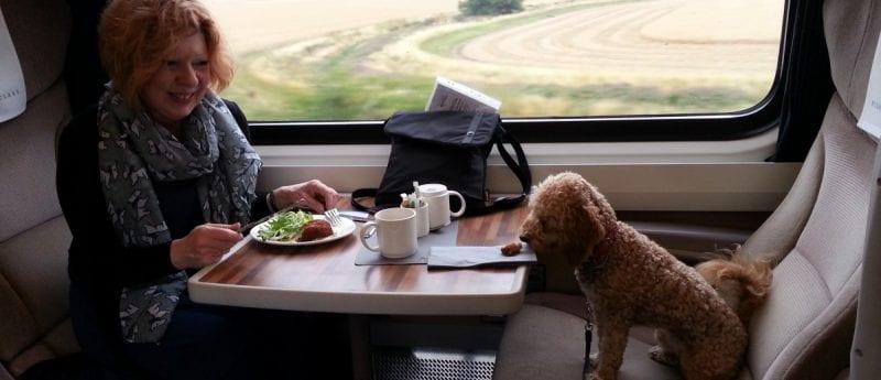 vận chuyển chó mèo bằng đường sắt