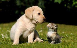 nuôi thú cưng theo phong thủy