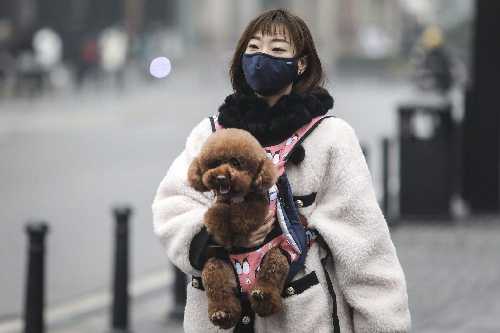 Bạn không cần đeo khẩu trang cho thú cưng của mình nhé